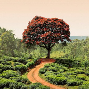 IDEALDECOR Fototapete »Roter BaumHügel Sri Lanka«, BlueBack, 2 Bahnen, 183 x 254 cm