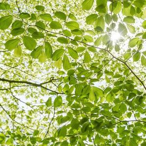 Komar Fototapete Im Frühlingswald, mehrfarbig-natürlich-bedruckt B/L: 4,5 m x 2,8 grün Fototapeten Tapeten Bauen Renovieren