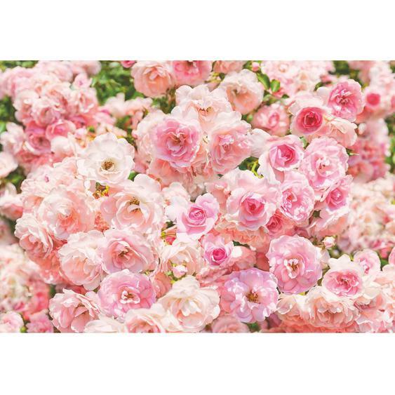 Komar Fototapete Rosa 368 cm x 254 cm