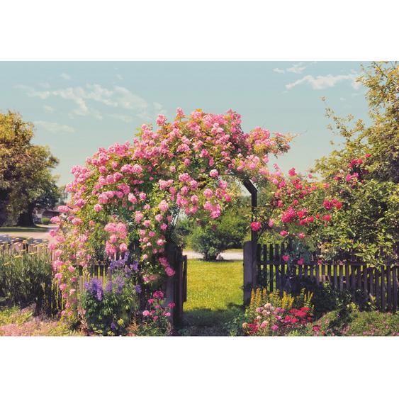 Komar Fototapete Rose Garden 368 cm x 254 cm