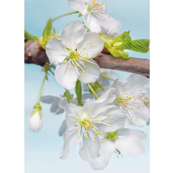 Komar Fototapete Vlies Blossom 184 cm x 248 cm