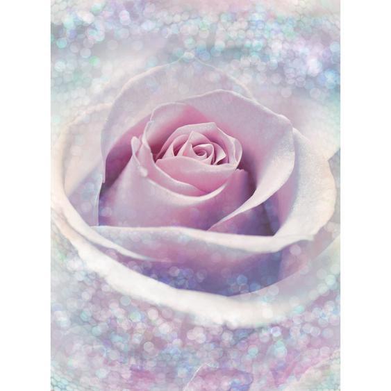 Komar Fototapete Vlies Delicate Rose 184 cm x 248 cm