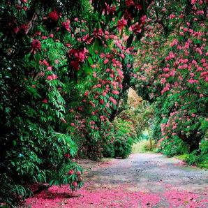 Komar Fototapete »Wicklow Park«, glatt, bedruckt, floral, Wald, (Set), ausgezeichnet lichtbeständig