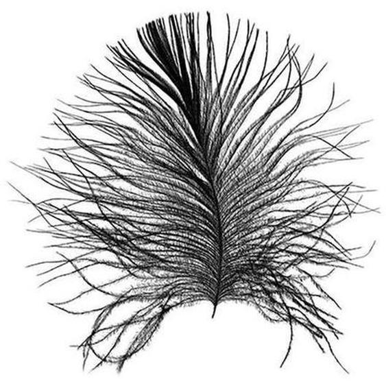 Komar Poster »Feather White«, Federn, Höhe: 70cm