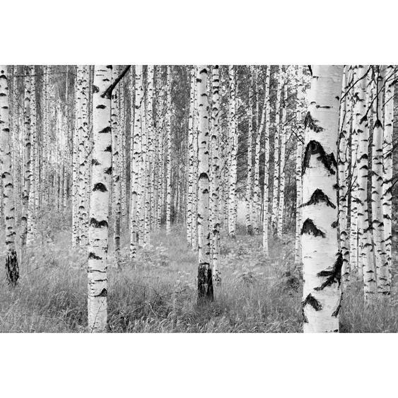 Komar Vliesfototapete Woods 368 cm x 248 cm