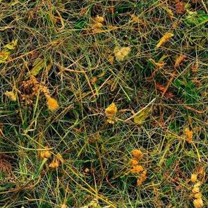 Komar Vliestapete »Bergheu«, glatt, naturalistisch