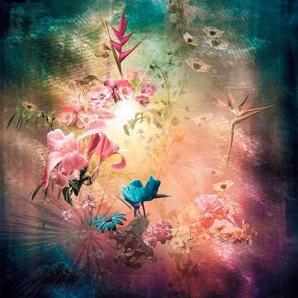Komar Vliestapete »Enlightenment«, glatt, naturalistisch