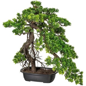 Kunstbonsai »Bonsai Podocarpus« Bonsai, Creativ green, Höhe 55 cm