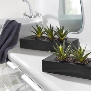 Home affaire Kunstpflanzen-Arrangement in 2 Varianten