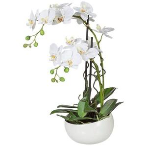 Kunstpflanze »Orchidee« Orchidee, Creativ green, Höhe 55 cm