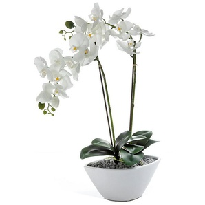 Home affaire Kunstblume »Orchidee« mit 2 Rispen, in einer Keramikschale