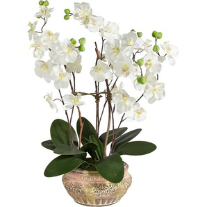 Schneider Kunstblume »Orchidee« mit schönem Übertopf