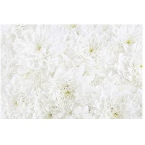 Matt Fototapete Dahlien Blumenmeer Weiß 1,9 m x 288 cm