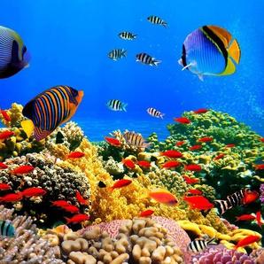 Papermoon Fototapete »Coral Colony Red Sea«, glatt