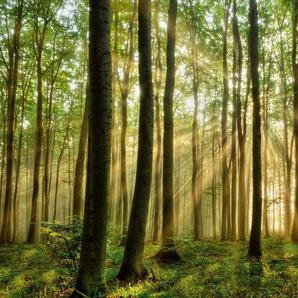 PAPERMOON Fototapete »Forest«, BlueBack, 7 Bahnen, 350 x 260 cm