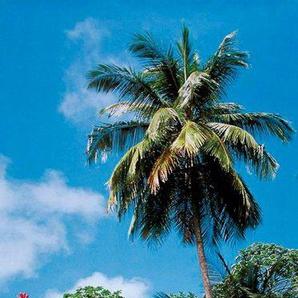 PAPERMOON Fototapete »Palm Path - Türtapete«, BlueBack, 2 Bahnen, 90 x 200 cm