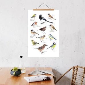 Plakat Vögel - Premium Poster