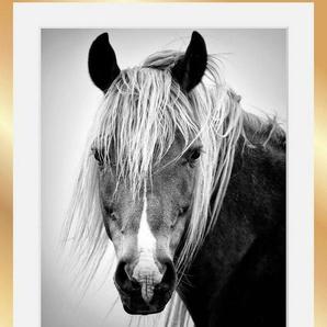 Bild »Pferdekopf«, in 3 Größen, gerahmt