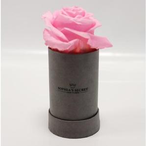 Rosenbox steingrau mit rosa Rosenkopf