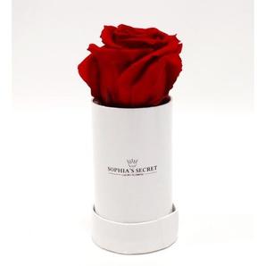 Rosenbox weiß mit rotem Rosenkopf