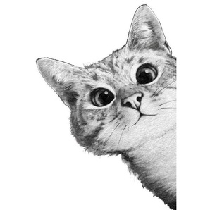 Sneaky Cat - Leinwandbild