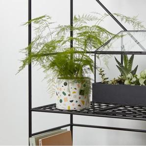 Trystan Indoor Pflanzenhaus, Schwarz