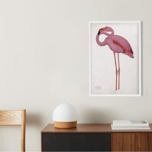 Vintage Flamingo from the Natural History Museum, gerahmter Kunstdruck (A2), Mehrfarbig und Weiss