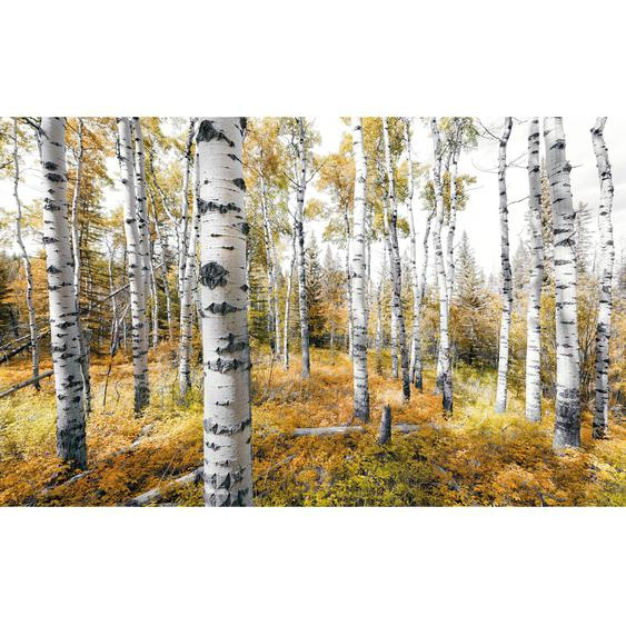 Vlies Fototapete Colorful Aspenwoods