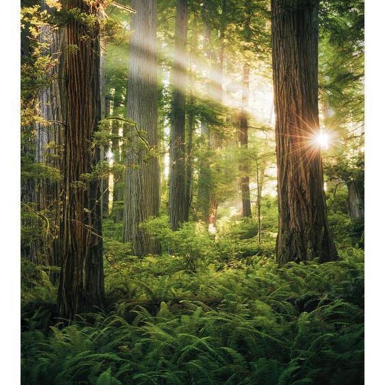 Vlies Fototapete Goblins Woods