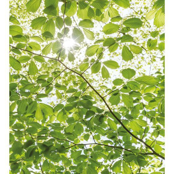 Vlies Fototapete Im Frühlingswald