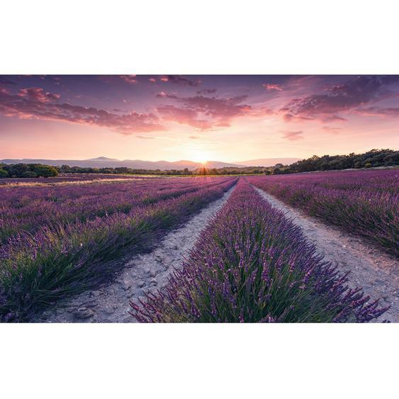 Vlies Fototapete Lavender Dream