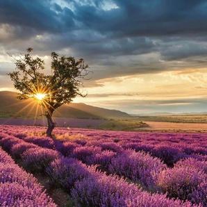 Vliestapete »Lavendelblüte in der Provence«, bunt