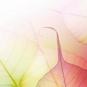 Fototapete Pink Design