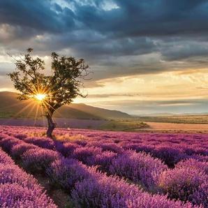 Vliestapete Lavendelblüte in der Provence