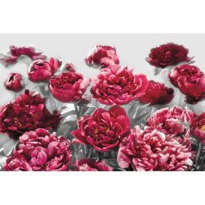 : Vliestapete, Rosa, Altrosa, B/H/T 368 248 cm